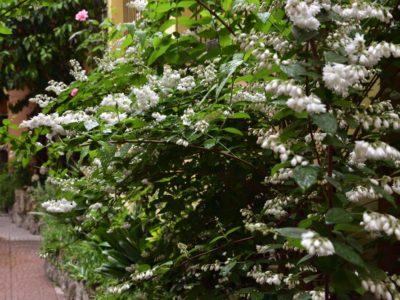 Fiori del nostro giardino